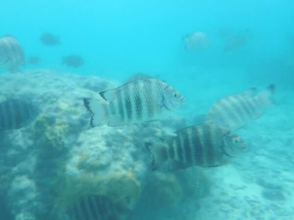 タモンビーチ水中写真