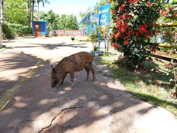 タロフォフォの滝公園動物