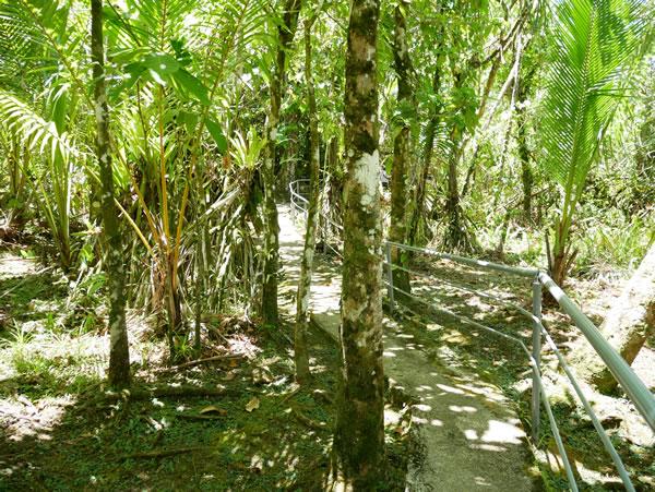 タロフォフォの滝公園 ジャングル